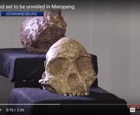 New fossil find set to be unveiled in Maropeng